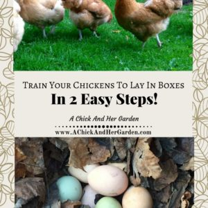 Use These 2 Steps To Get Your Chickens Laying In Nesting Boxes