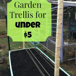 Raised Bed Trellis for Under $5!