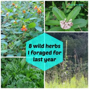 8 Wild herbs I foraged for in summer