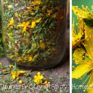 Growing and Using St. John's Wort – What You Need to Know