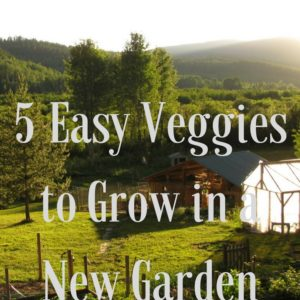 Our 5 Easiest Vegetables to Grow!