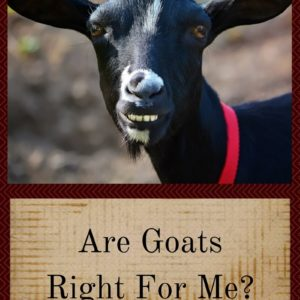 Are Goats Right For Me?