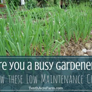 Are you a Busy Gardener? Grow these Low Maintenance Crops