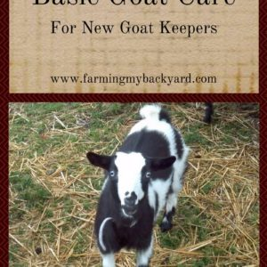 Basic Goat Care For New Goat Keepers