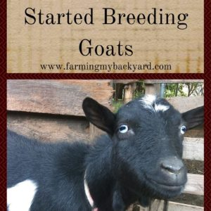 Basic Goat Care: How To Get Started Breeding Goats