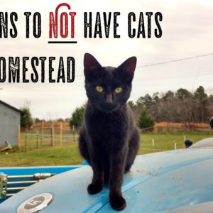 15 Reasons to NOT have Cats on the Homestead