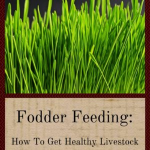 Fodder Feeding: How To Get Healthy Livestock AND Save Money