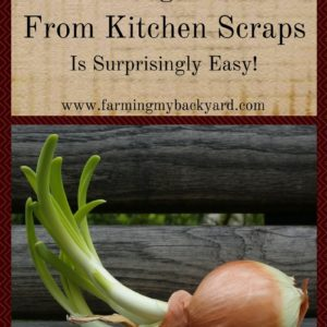 Growing Plants From Kitchen Scraps Is Surprisingly Easy!