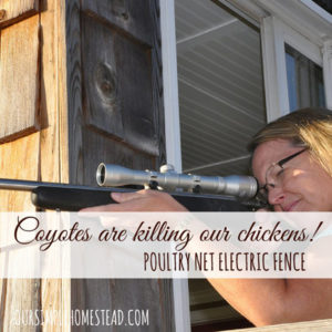 Coyotes are killing our chickens!