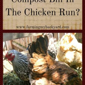 Should You Put Your Compost Bin In The Chicken Run?