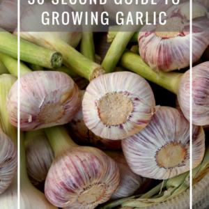 Quick and Dirty Cheat Sheet to Growing Garlic