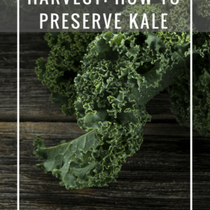 How to Preserve Kale