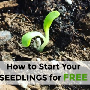 Ways to Get Your Seedlings Started for Free