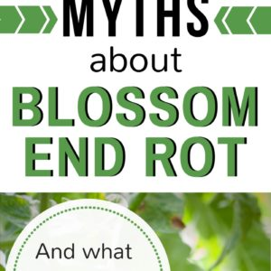 The 2 Biggest Myths About Blossom End Rot