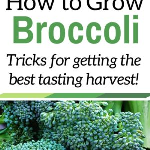 Tricks To Growing Great Broccoli