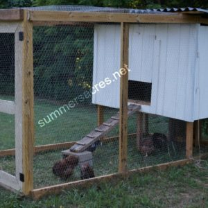 Chicken Coops | Raising Backyard Chickens for Eggs