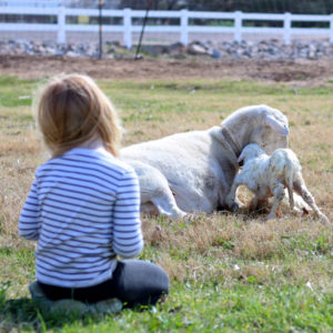 Learning Through Farm Stories