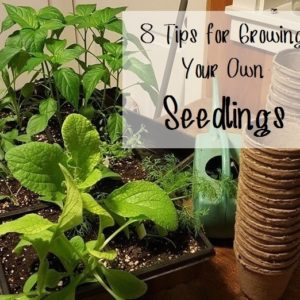 8 Tips for Growing Your Own Seedlings