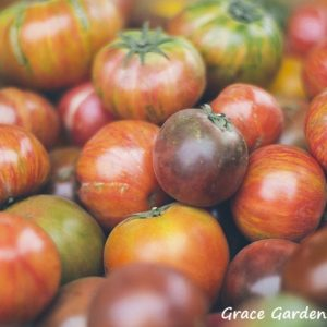 Secrets To Successfully Growing Tomatoes