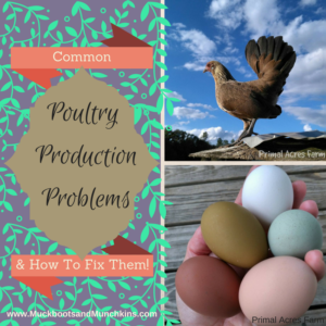 Learn How to Diagnose and Overcome Low Poultry Egg Production