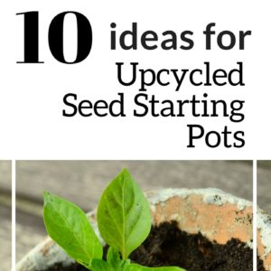10 Ideas For Upcycled Seed Starting Pots