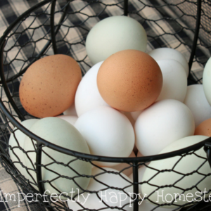 Everything You Need to Know About Fresh Eggs