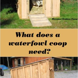 What does a goose coop need?