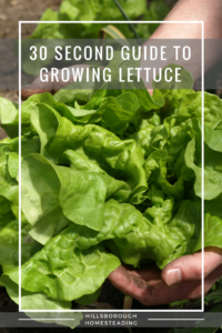 30 Second Cheat Sheet on Growing Lettuce