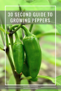 30 Second Cheat sheet on Growing Peppers