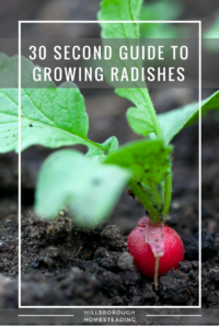 Quick Reference Sheet for Growing Radishes