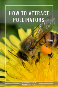 How to Attract Bees and Other Pollinators to Your Homestead