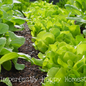 Have the Best Spring Vegetable Garden