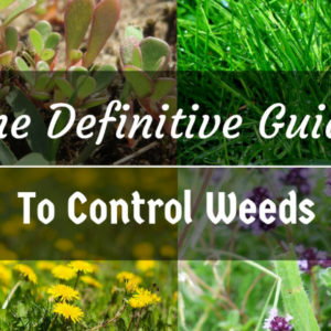 The Definitive Guide to Control Weeds in Your Garden
