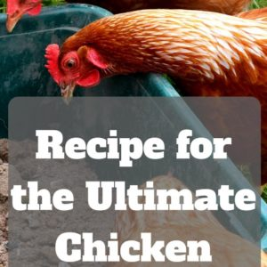 The Ultimate Chicken and Rabbit Dust Bath Recipe