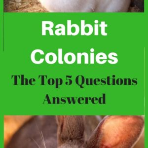 Keeping a Meat Rabbit Colony – The Top 5 Questions Answered!