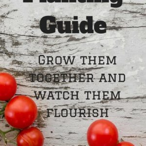 Vegetable Garden Companion Planting Guide
