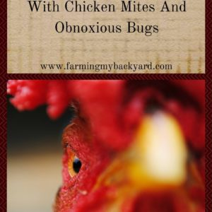 Be Ruthless With Chicken Mites and Obnoxious Bugs
