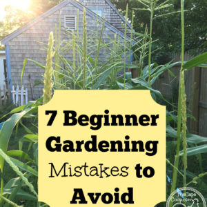 7 Beginner Gardening Mistakes to Avoid