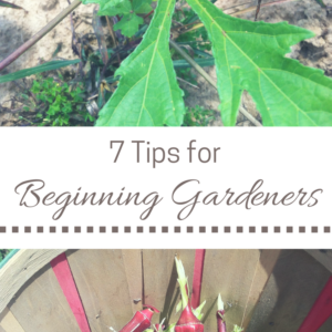 7 Helpful Hints for Beginning Gardeners + Gardening Resources