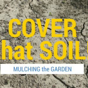 Cover That Soil! Mulching the Garden