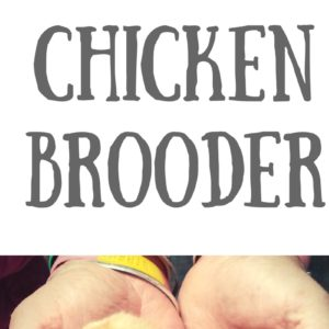 Surprisingly Simple Expandable DIY Chicken Brooder