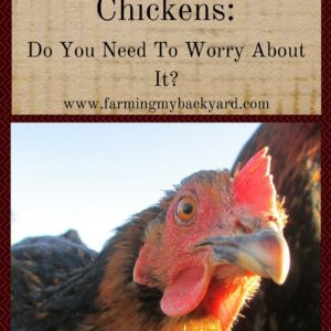Deworming Chickens: Do You Need To Worry About It?