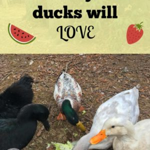 Treats Ducks Will Love!