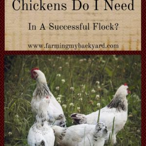 How Many Chickens Do I Need In A Successful Flock?