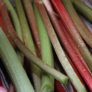 Rhubarb: How to Plant, Grow, Harvest and Preserve