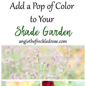 Add a Pop of Color to Your Shade Garden