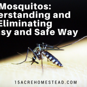 How to Eliminate Mosquitos the Easy Way