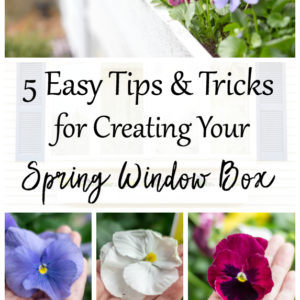 5 Easy Tips & Tricks For Creating Your Spring Window Box