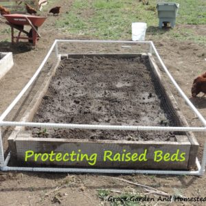 Predator Proofing Raised Beds