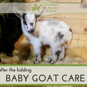 After the Kidding – Baby Goat Care